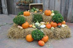 Tipps für Niederösterreich I 1000things - wir inspirieren Pumpkin Images, Fall Pumpkins, Gourds, Flower Arrangements, Floral Design, Christmas Decorations, Autumn, Flowers, Outdoor