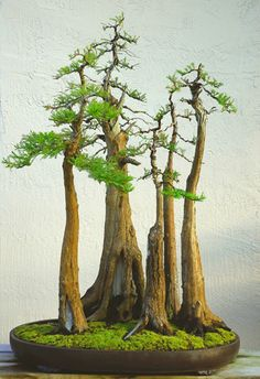Bonsai--totally amazing, it's a forest!