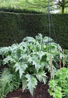 Cardoons in the secret garden, Regent's Park. Gardenista