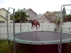 Dog on the trampoline- you can tell he is having a great time! love it!