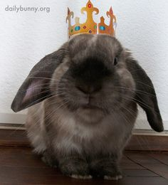 On his birthday all bow to King Bunny - April 15, 2014