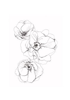 Poppy Flower Line Drawing Poppy Flower Line Drawing. Poppy Flower Line Drawing. Poppies Flowers Line Art in poppy flower drawing Botanical Poppy Flower Drawing Posted in botanical gardens Flower Line Drawings, Art Drawings, Drawing Flowers, Ink Tatoo, Poppies Tattoo, Illustration Art, Illustrations, Plant Drawing, Drawing Drawing