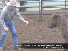 Video: Teaching Your Horse to Back Up at Liberty with Jonathan Field | Horse Journals