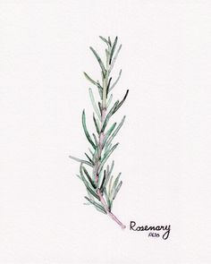 """Rosemary Herb Painting - Print from Original Watercolor Painting, """"Rosemary"""", Kitchen Decor, Green Herb by TheColorfulCatStudio on Etsy https://www.etsy.com/listing/188688048/rosemary-herb-painting-print-from"""