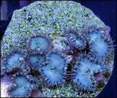 BlueDeath-Paly01.jpg (700×593)