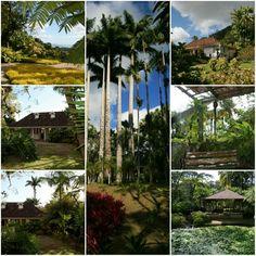 Jardin de Balata #Martinique © AliZéMédia