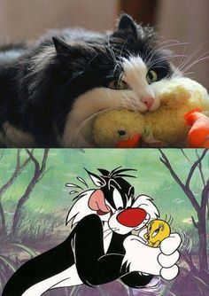 Omg Sylvester is real...