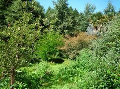 Forest Gardening: Establishing the Ground Layer - Permaculture - MOTHER EARTH NEWS
