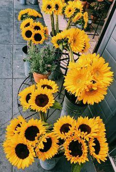 #sunflowers #yellowmakesmehappy