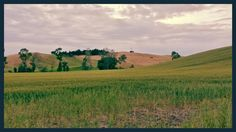 i campi sopra cappaneto