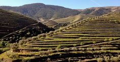In a region known for port, winemakers along the Douro Valley are taking top prizes for reds and whites, Global Post reports.