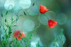 Flowers in my heaven by RezzanAtakol.deviantart.com on @deviantART