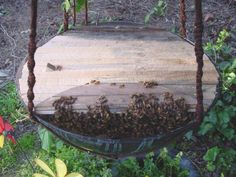 10 Bee-utiful Beehive Diy Projects
