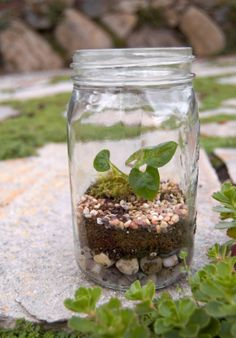 Making A Terrarium: A Fun Summer Project