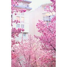 Just Things What We Like :) #1 » ANGEL.GE ❤ liked on Polyvore featuring backgrounds, flowers, photos, pictures, art and fillers
