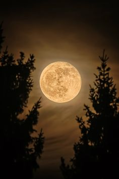 Magic night with full moon in black and white. Moon Images, Moon Photos, Full Moon Pictures, Luna Moon, Shoot The Moon, Moon Photography, Good Night Moon, Beautiful Moon, Moon Art