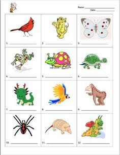 Dichotomous-Classification-Key-111406 Teaching Resources - TeachersPayTeachers.com