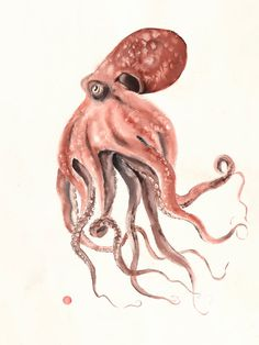 Watercolor Ocean, Watercolor Artwork, Watercolor Illustration, Red Octopus, Octopus Art, Octopus Photography, Octopus Drawing, Watercolor Paintings For Beginners, Abstract Animals