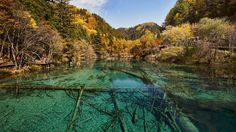 Five Flower Lake is considered the jewel of Juizhaigon National Park in China. It's a shallow multi-colored lake with water so clear you can see the ancient fallen tree trunks that criss-cross it. (Wikimedia/chensiyuan)