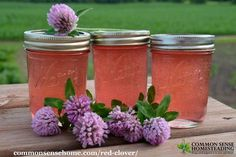 Red Clover Jelly Recipe, Sauce Pizza, Jam And Jelly, Jelly Recipes, Sweet Recipes, Flower Food, Vegetable Drinks, Canning Recipes, Canning Tips