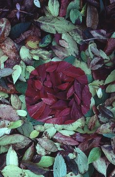 thelandscapestudio:  Andy Goldsworthy