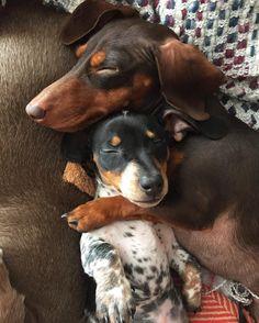 Harlow & Sage cuddling  (See this Instagram photo by @harlowandsage • 50.7k likes)
