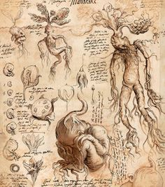 Mandrake-Harry Potter and the chamber of the secrets by JIM KAY