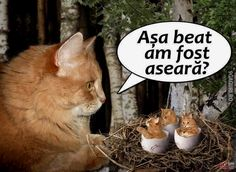 Așa beat am fost aseară? Cringe, Comedy, Smile, Humor, Cats, Funny, Crushed Stone, Gatos, Humour