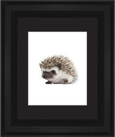 Baby Hedgehog Framed Print, Black, Classic, White, Black, Single piece, 8 x 10 inches
