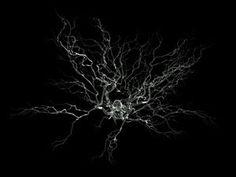 Identifican las redes de neuronas en el cerebro que se rompen en la enfermedad psiquiátrica