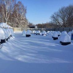 Bee, Snow, Outdoor, Beehive, Beekeeping, Bees, Outdoors, Honey Bees, Outdoor Games