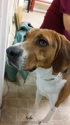6 / 18     Petango.com – Meet Axel, a 1 year 2 months Coonhound, Treeing Walker / Mix available for adoption in CODY, WY Address  5537 Greybull Highway , Unit, CODY, WY, 82414  Phone  (307) 587-5110  Website  http://www.parkcountyanimalshe lter.org  Email  manager@parkcountyanimalshelte r.com