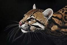 painting by Heather Lara - portrait and wildlife artist