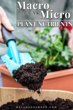 Building healthy soil full of macronutrients and micronutrients is the number one thing you can do to bolster and enhance your garden. Learn more about macronutrients vs. micronutrients in plants so you can fill your present soil with the vast array of essential nutrients that plants crave. #gardeningtips #howtogarden #plantnutrients #gardensoil Garden Soil, Vegetable Garden, Gardening, Lawn Fertilizer, Organic Fertilizer, Best Garden Tools, Garden Tips, Organic Mulch, Micro Nutrients