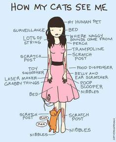 Illustrated Feline Funnies -  'Cat vs Human'