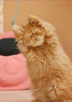 Okay, everybody! Stretch right!