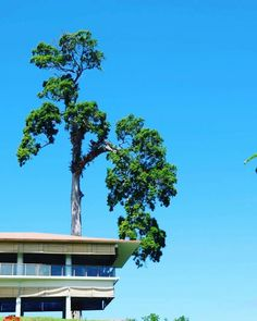 Grand Luley Resort