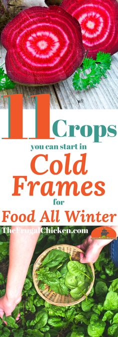 September is here...but there's still plenty you can plant for a winter harvest. Here's 11 vegetables you can start in cold frames right now!