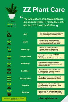 ▷Zamioculcas Zamiifolia – How to Care and Propagate art design landspacing to plant Zz Plant Care, House Plant Care, Snake Plant Care, Pothos Plant Care, Sansevieria Plant, Garden Plants, Indoor Plants, Indoor Gardening, Vegetable Garden