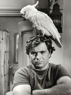 """Baretta ran from 1975 to 1978. Actor Robert Blake played  a street-smart, maverick undercover cop with the NYPD and had a pet cockatoo named Fred.  Baretta ran  around in a rusted-out 1966 Chevy Impala four-door sedan nicknamed """"The Blue Ghost.""""  -- """"You can take dat to da bank."""""""