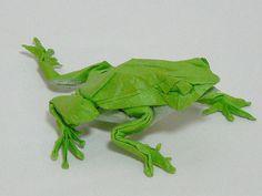 Japanese Tree Frog by Satoshi Kamiya