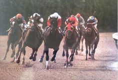 Hot N Nasty (left) battles Ruffian in the stretch. 2 year old Hot N Nasty was the only horse to make Ruffian work for a victory. Ruffian finally pulled away from her in the stretch.