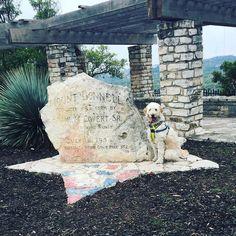 Here I am hiking beautiful Mt. Bonnell! #hiking #austin #goldendoodle #goldendoodlesofinstagram #doodle #doodlelove #doodletales #excellent_dogs #photos4ellen #buzzfeedanimals #bestwoof #ruffpost #clubdoodle #topdogphoto #lacyandpaws #dogsofinstagram # by alan_goldendoodle