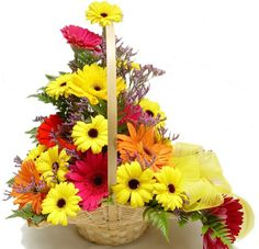 We offer Variety of bouquets and baskets to every Occasion. . Mixed Gerbras  basket is looking very Bright and Colourful. Our Shop2Vizag.com provides four Colours of the Gerbras on this basket. The colors of the gerbras are Red, yellow, Dark pink and Orange gerbras are beautifully arranged in a basket along with greenery and fillers. Mixed gerbras basket is full of sunshine and Will Truely Brighten up the day your friend is not Feeling wel.