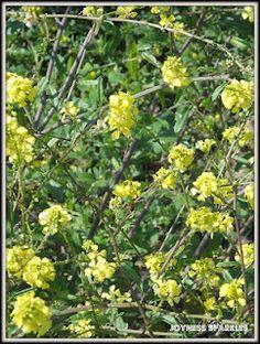 More yellow wildflowers...