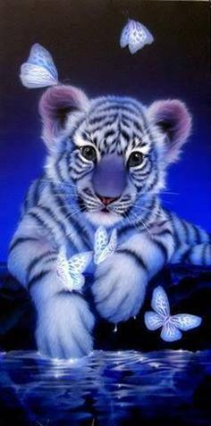 butterly tiger