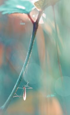 Magda Wasiczek Photography Galleries Fine Art and Commercial - Magda Wasiczek Photography Portfolio Bokeh Photography, Photography Gallery, Photography Portfolio, Aqua Coral, Teal And Pink, Turquoise, Foto Macro, Shades Of Peach, Peach And Green