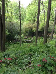 zen garden oasis