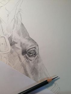 Pop-Up Equine Art Lesson with Tony O'Connor Part 1/3: I love the eye in this! whitetreestudio.ie - using pointy pencils, build up tones and form by cross hatching & blending