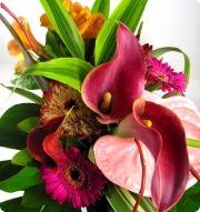 Exotic Flowers in dreams
